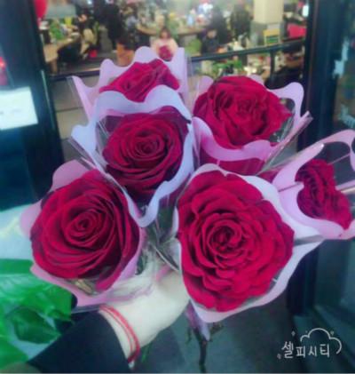 茶桔便总部送玫瑰献温暖